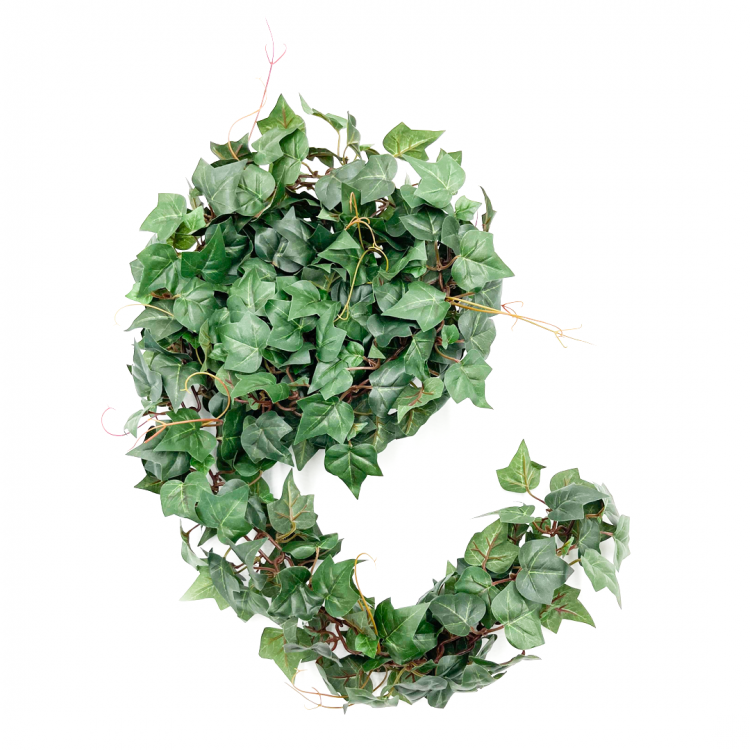 5' Ivy Chain